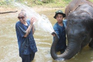 elephant trainer chang mai thailand