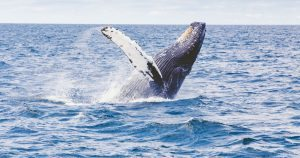 whale watching tour byron bay australia east coast