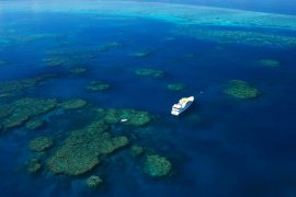 ribbon reef cod hole scuba dive liveaboard trip cairns spirit of freedom australia 2