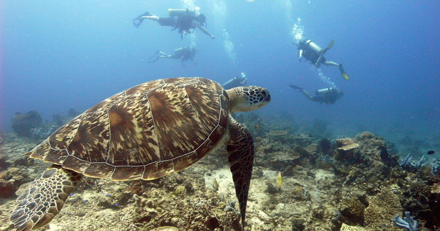 Scuba Dive Courses On Gili Trawangan With Big Bubble
