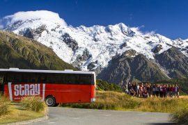 stray new zealand hop on hop off bus pass kiwi backpacker