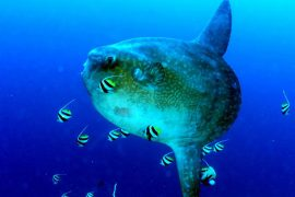 scuba dive courses nusa lembongan bali indonesia bali diving academy open water