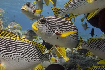 great barrier reef advanced open water dive course live aboard australia cairns