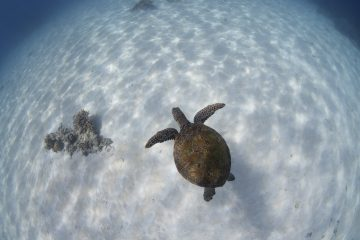 great barrier reef snorkel day trip cairns australia