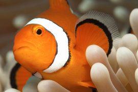 open water dive course cairns great barrier reef australia deep sea divers den