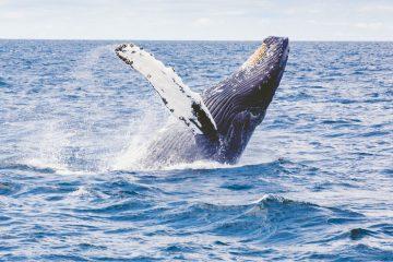 whale watching tour byron bay australia east coast