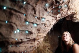 waitomo glowworm cave tour new zealand north island