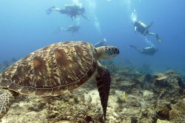scuba dive courses open water course padi ssi gili t trawangan bali indonesia big bubble