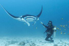 scuba dive day trip komodo national park indonesia advanced beginner blue marlin komodo