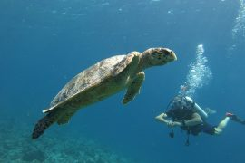 budget scuba diving maldives package maldives fulidhoo local island vaavu stoll scuba diving