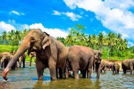 sri lanka uncover tour TruTravels south east asia backpacker group adventure